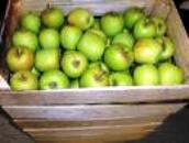 manzana criolla